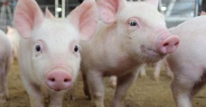 Nyártól 30 milliárd az állattartó telepeknek –  VP2-4119-21